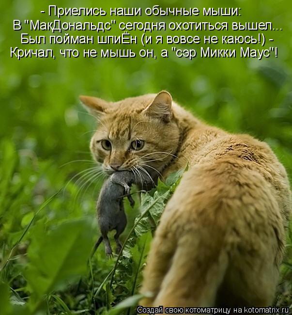 """Котоматрица: - Приелись наши обычные мыши: В """"МакДональдс"""" сегодня охотиться вышел... Был пойман шпиЁн (и я вовсе не каюсь!) -  Кричал, что не мышь он, а """"сэр Ми"""