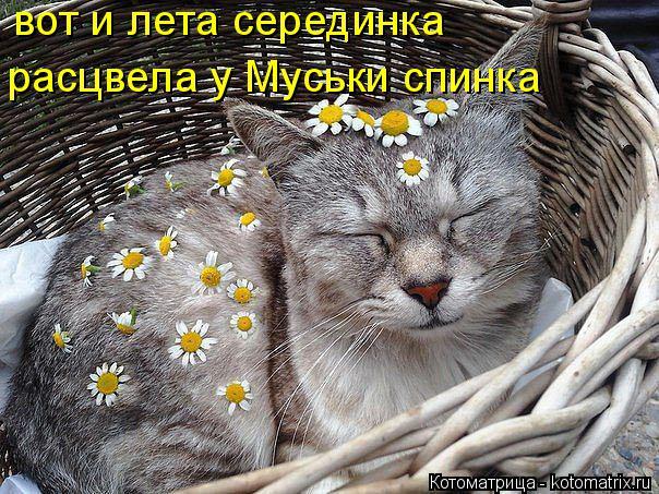 Котоматрица: вот и лета серединка расцвела у Муськи спинка