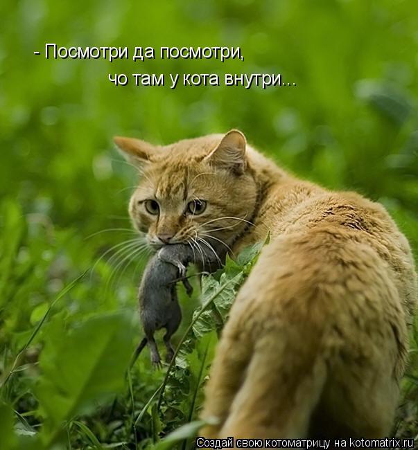 Котоматрица: - Посмотри да посмотри, чо там у кота внутри...