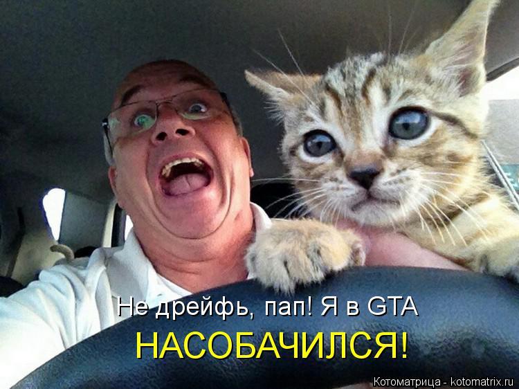 Котоматрица: Не дрейфь, пап! Я в GTA НАСОБАЧИЛСЯ!
