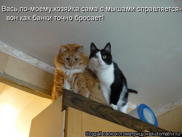 Котоматрица: Вась,по-моему,хозяйка сама с мышами справляется- вон как банки точно бросает!