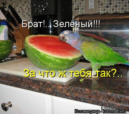Котоматрица: Брат!.. Зелёный!!! За что ж тебя так?..