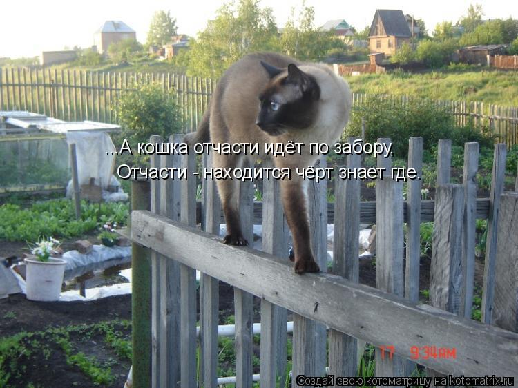 Котоматрица: ...А кошка отчасти идёт по забору, Отчасти - находится чёрт знает где.