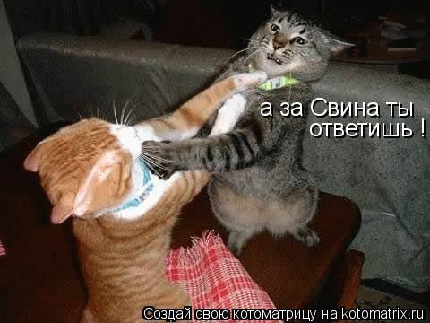 Котоматрица: а за Свина ты ответишь !