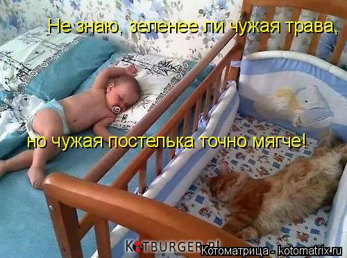 Котоматрица: Не знаю, зеленее ли чужая трава, но чужая постелька точно мягче!