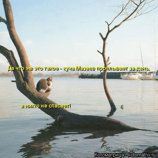 Котоматрица: Да что же это такое - куча Мазаев проплывает за день,  а никто не спасает!