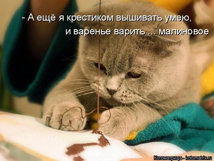 Котоматрица: - А ещё я крестиком вышивать умею,  и варенье варить ... малиновое