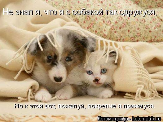 Котоматрица: Не знал я, что я с собакой так сдружуся,  Но к этой вот, пожалуй, покрепче я прижмуся.