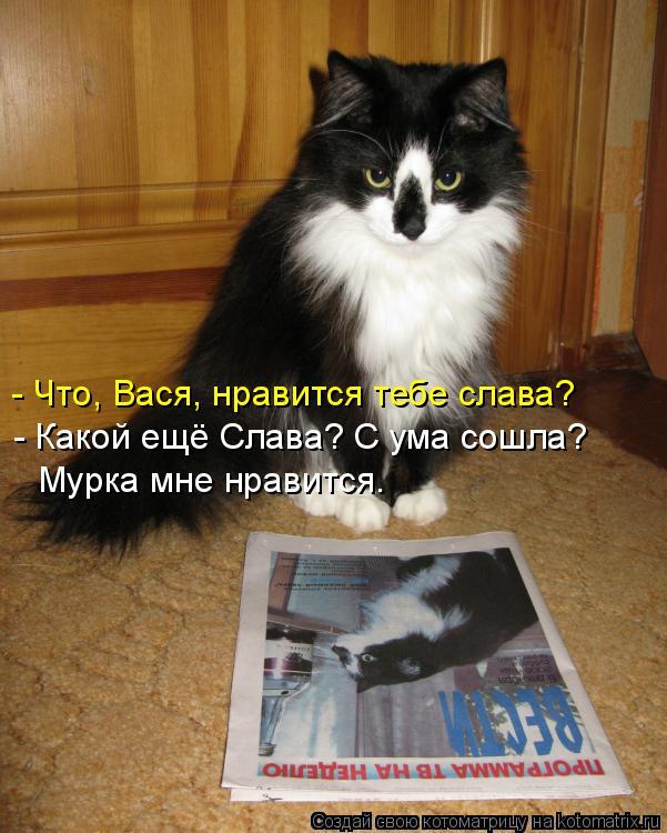 Котоматрица: - Что, Вася, нравится тебе слава? - Какой ещё Слава? С ума сошла?  Мурка мне нравится.