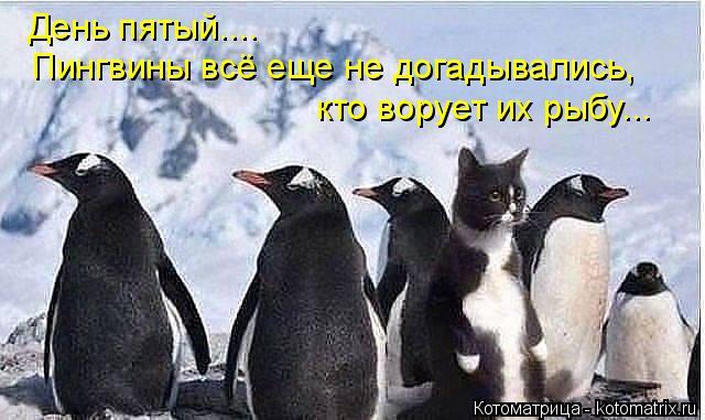 Котоматрица: День пятый....  Пингвины всё еще не догадывались,  кто ворует их рыбу...