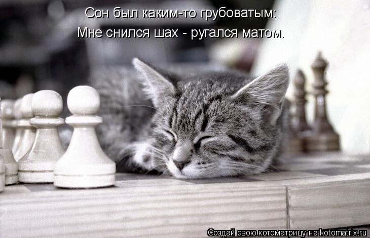 Котоматрица: Сон был каким-то грубоватым: Мне снился шах - ругался матом.