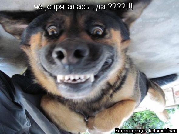 Котоматрица: чё ,спряталась , да ????!!!