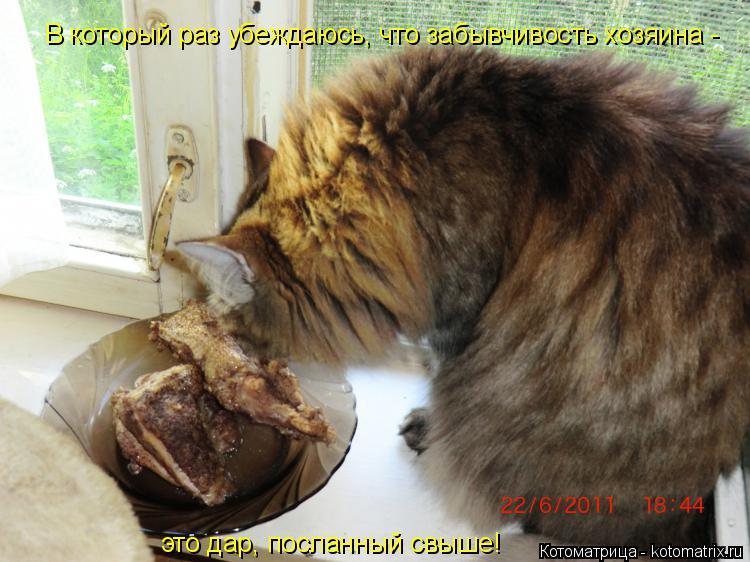 Котоматрица: В который раз убеждаюсь, что забывчивость хозяина -  это дар, посланный свыше!