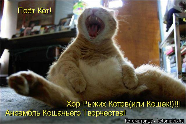 Котоматрица: Ансамбль Кошачьего Творчества! Поёт Кот! Хор Рыжих Котов(или Кошек!)!!!
