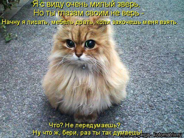 Котоматрица: Я с виду очень милый зверь, Но ты глазам своим не верь -  Начну я писать, мебель драть, коли захочешь меня взять. Что? Не передумаешь? Ну что ж, б