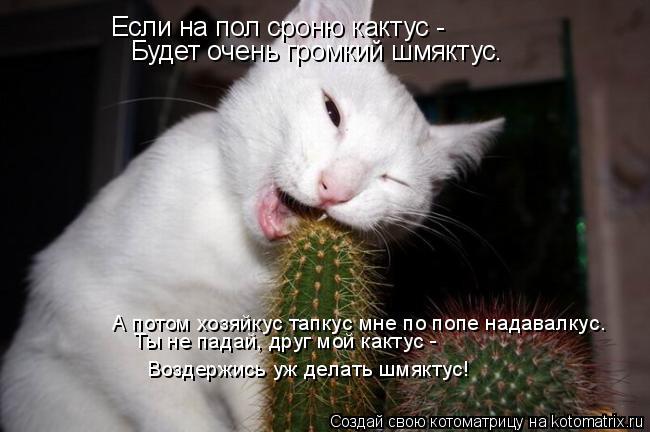 Котоматрица: Если на пол сроню кактус -  Будет очень громкий шмяктус. А потом хозяйкус тапкус мне по попе надавалкус. Ты не падай, друг мой кактус -  Воздер