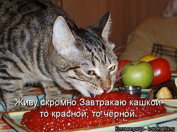 Котоматрица: Живу скромно.Завтракаю кашкой- то красной, то чёрной.