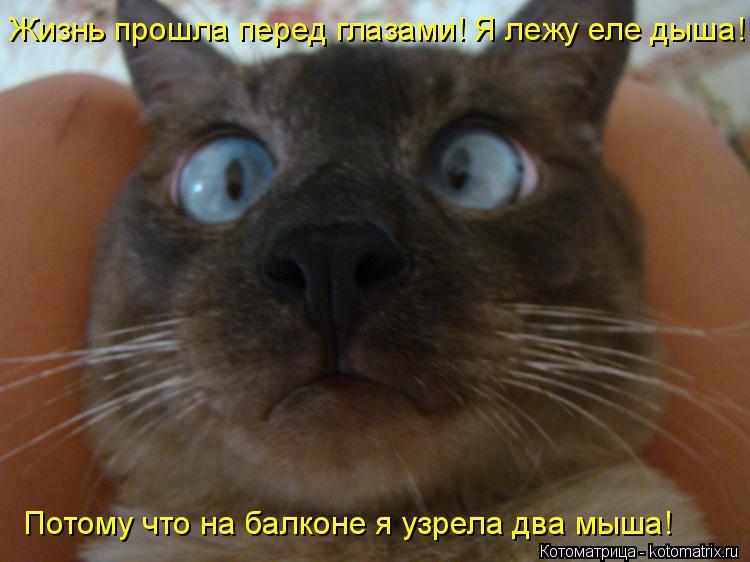 Котоматрица: Жизнь прошла перед глазами! Я лежу еле дыша! Потому что на балконе я узрела два мыша!