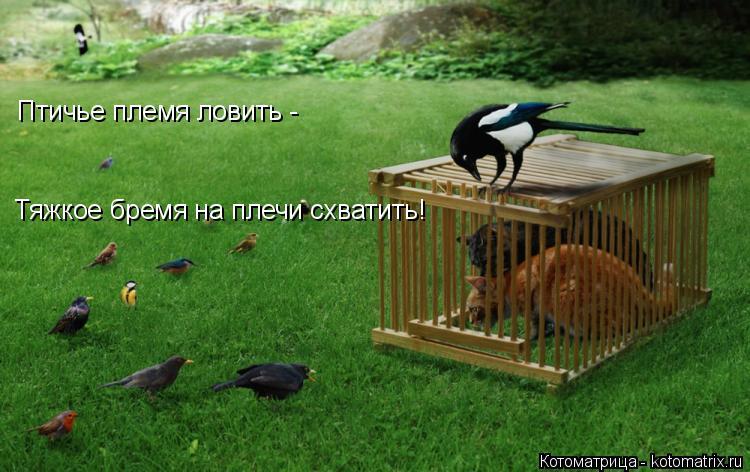 Котоматрица: Птичье племя ловить -  Тяжкое бремя на плечи схватить!