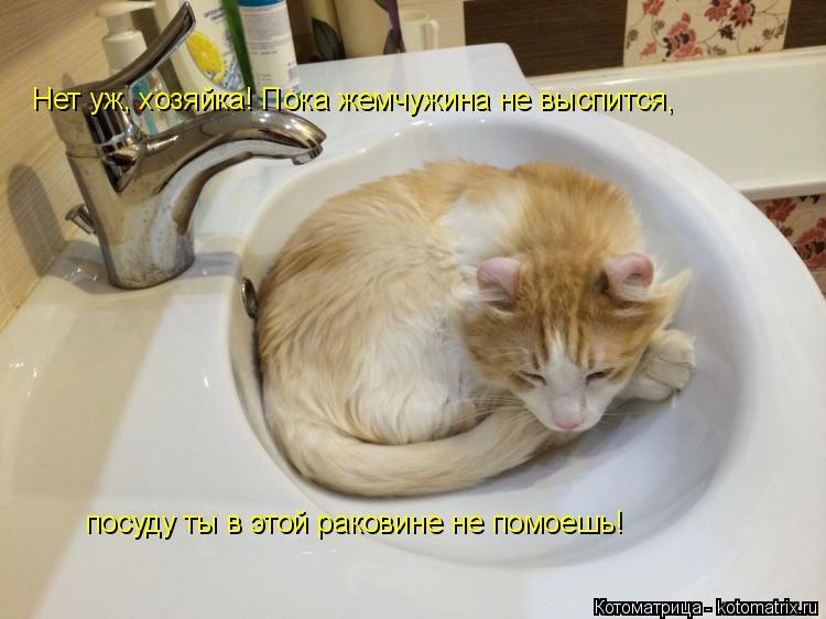 Котоматрица: Нет уж, хозяйка! Пока жемчужина не выспится,  посуду ты в этой раковине не помоешь!