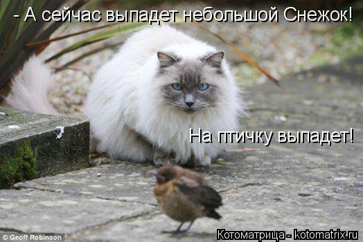 Котоматрица: - А сейчас выпадет небольшой Снежок! На птичку выпадет!