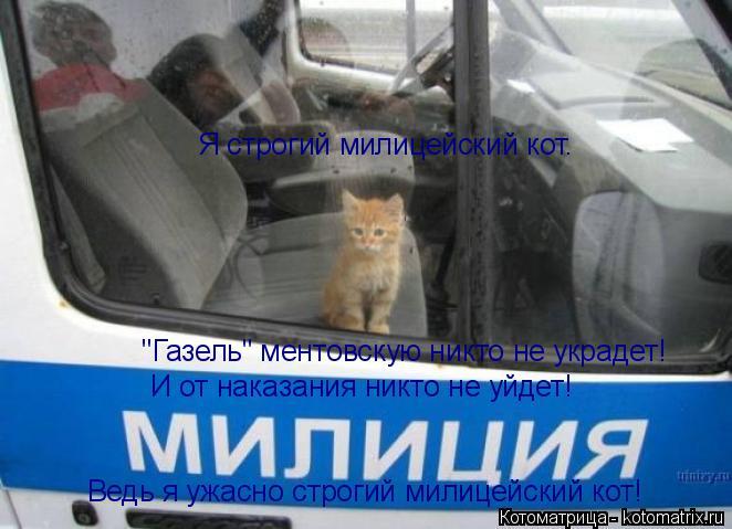 """Котоматрица: Я строгий милицейский кот.  """"Газель"""" ментовскую никто не украдет! И от наказания никто не уйдет! Ведь я ужасно строгий милицейский кот!"""