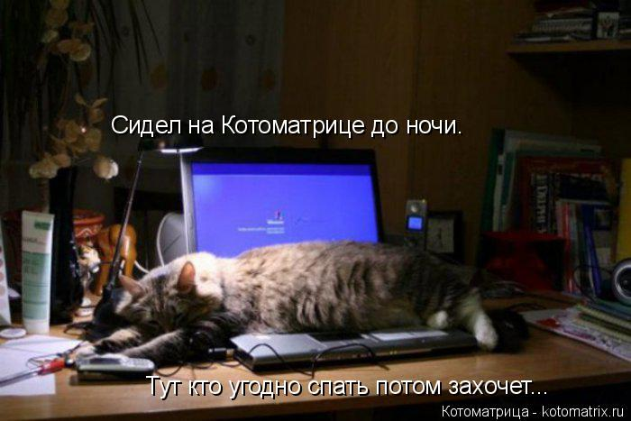 Котоматрица: Сидел на Котоматрице до ночи.  Тут кто угодно спать потом захочет...