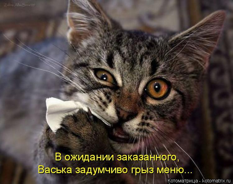 Котоматрица: В ожидании заказанного, Васька задумчиво грыз меню...