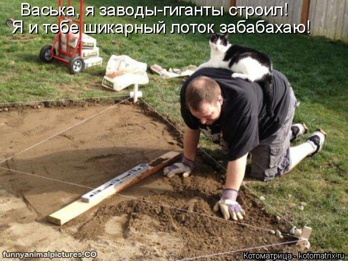 Котоматрица: Я и тебе шикарный лоток забабахаю! Васька, я заводы-гиганты строил!