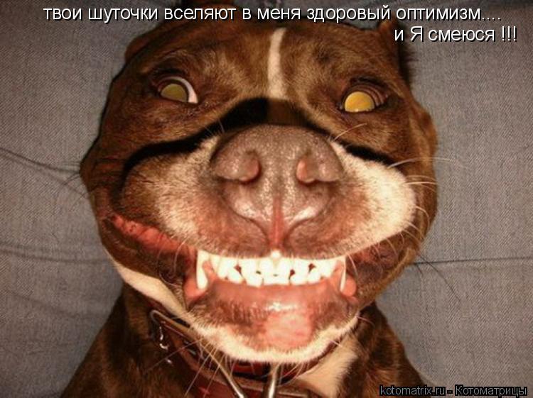 Котоматрица: твои шуточки вселяют в меня здоровый оптимизм.... и Я смеюся !!!