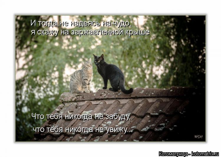 Котоматрица: И тогда,не надеясь на чудо, я скажу на заржавленной крыше Что тебя никогда не забуду, что тебя никогда не увижу...