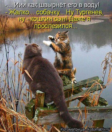 Котоматрица: -... Иии как швырнёт его в воду! - Жалко... собачку... Ну Тургенев, ну - кошкин сын! Даже я  прослезился...