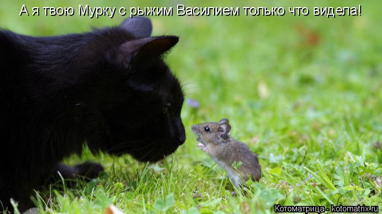 Котоматрица: А я твою Мурку с рыжим Василием только что видела!