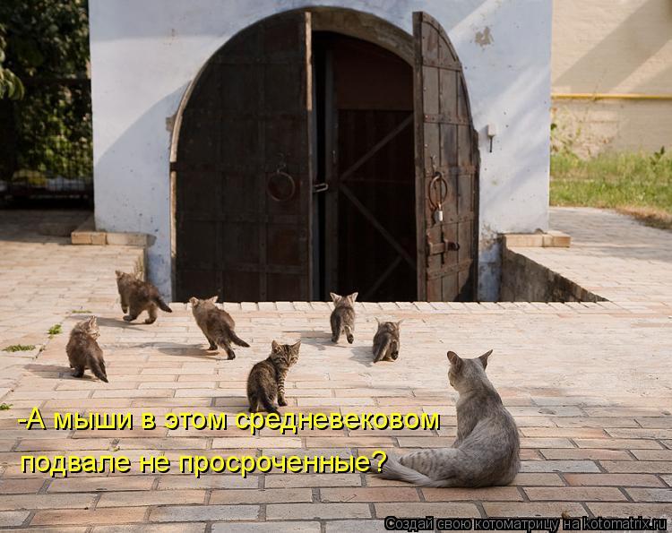 Котоматрица: -А мыши в этом средневековом подвале не просроченные?