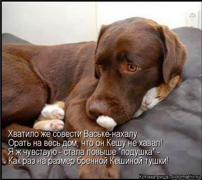 """Котоматрица: Хватило же совести Ваське-нахалу Орать на весь дом, что он Кешу не хавал! Я ж чувствую - стала повыше """"подушка"""" - Как раз на размер бренной Кеши"""