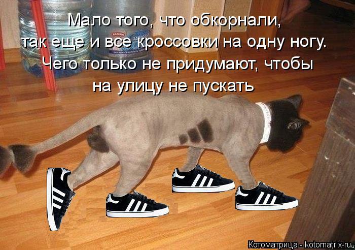 Котоматрица: Мало того, что обкорнали, так еще и все кроссовки на одну ногу. Чего только не придумают, чтобы на улицу не пускать