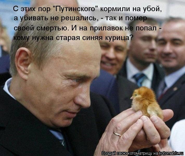 """Котоматрица: С этих пор """"Путинского"""" кормили на убой, а убивать не решались, - так и помер своей смертью. И на прилавок не попал - кому нужна старая синяя ку"""