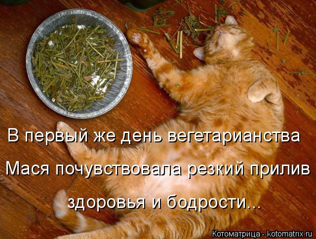 Котоматрица: В первый же день вегетарианства Мася почувствовала резкий прилив здоровья и бодрости...