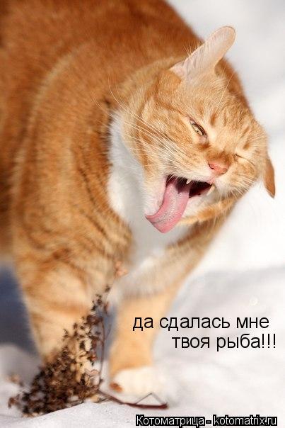 Котоматрица: да сдалась мне  твоя рыба!!!