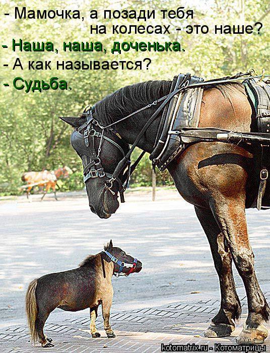 Котоматрица: - Мамочка, а позади тебя  на колесах - это наше? - Наша, наша, доченька. - А как называется? - Судьба.