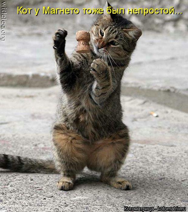 Котоматрица: Кот у Магнето тоже был непростой...