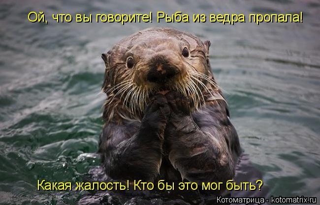 Котоматрица: Ой, что вы говорите! Рыба из ведра пропала! Какая жалость! Кто бы это мог быть?
