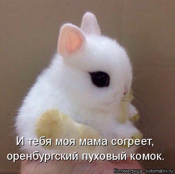 Котоматрица: И тебя моя мама согреет, оренбургский пуховый комок.