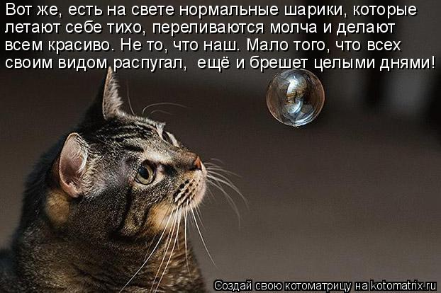 Котоматрица: Вот же, есть на свете нормальные шарики, которые летают себе тихо, переливаются молча и делают всем красиво. Не то, что наш. Мало того, что все