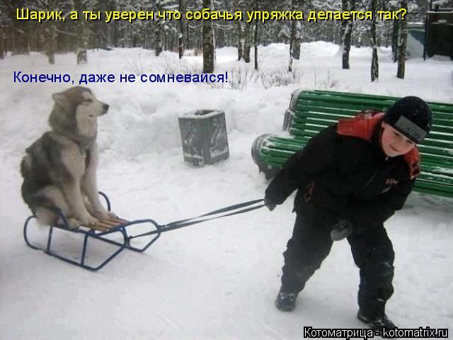 Котоматрица: Шарик, а ты уверен что собачья упряжка делается так? Конечно, даже не сомневайся!