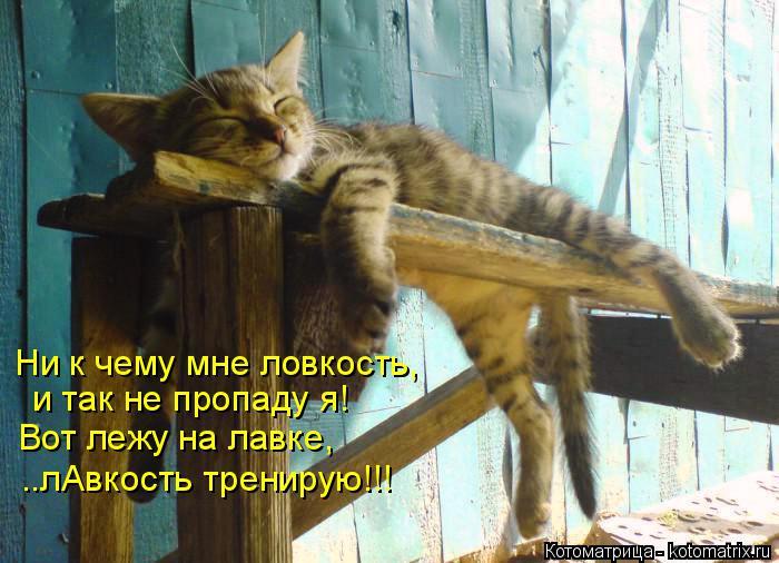 Котоматрица: Ни к чему мне ловкость, и так не пропаду я! Вот лежу на лавке, ..лАвкость тренирую!!!