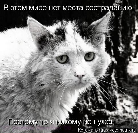 Котоматрица: В этом мире нет места состраданию. Поэтому-то я никому не нужен...