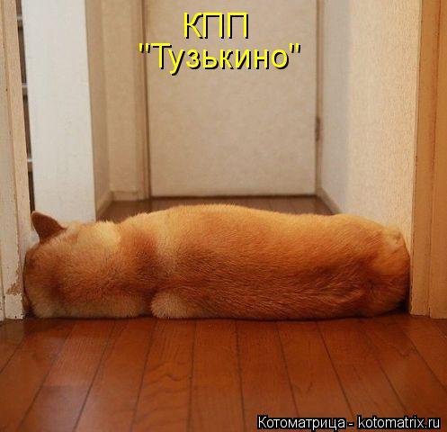 "Котоматрица: КПП ""Тузькино"""