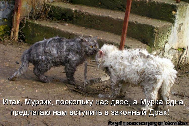 Котоматрица: Итак, Мурзик, поскольку нас двое, а Мурка одна, предлагаю нам вступить в законный Драк!