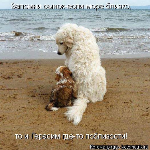 Котоматрица: Запомни,сынок-если море близко, то и Герасим где-то поблизости!